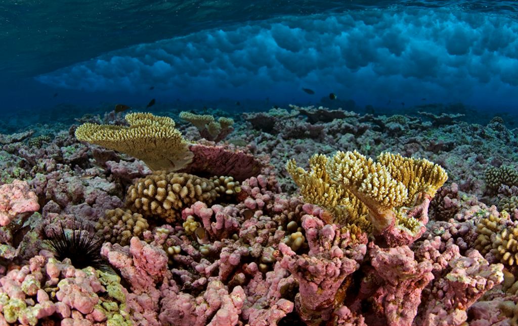 1024px-habitats_at_kingman_reef_-_peerj-81-fig-2e