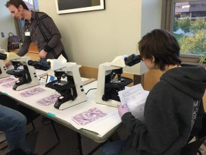 A teen looks through a microscope to help determine a medical diagnosis.