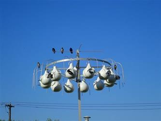 Picture of the nest gourds for purple martins