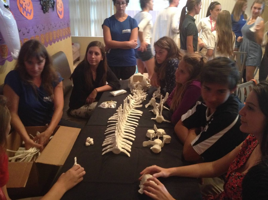 Students articulating a dolphin skeleton. Scientist Gretchen Lovewell is on the left in Mote shirt.